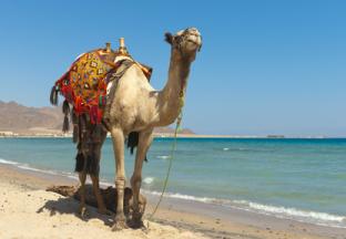 Urlaub in Ägypten: Ob am Roten Meer wie hier bei Taba oder am Nil: lernen Sie die jahrtausende alte Kultur in Ägypten kennen und genießen Sie wunderschöne Badeurlaube am Roten Meer.