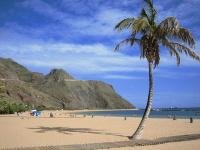 Palme am langen Strand auf Teneriffa