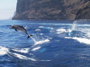 Urlaub auf Teneriffa: Meer, Berge, Lava und Delphine sowie Wale: Genießen Sie die Vielfalt in Ihrem Teneriffa Urlaub