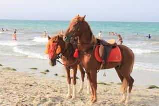 Arabaer Pferde am Strand von Djerba